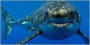 smiling shark pic